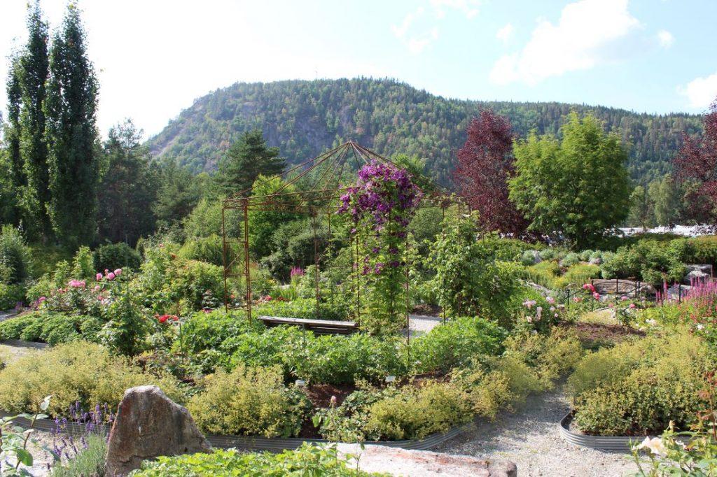 Overblikk over rosehagen til Odden Hage
