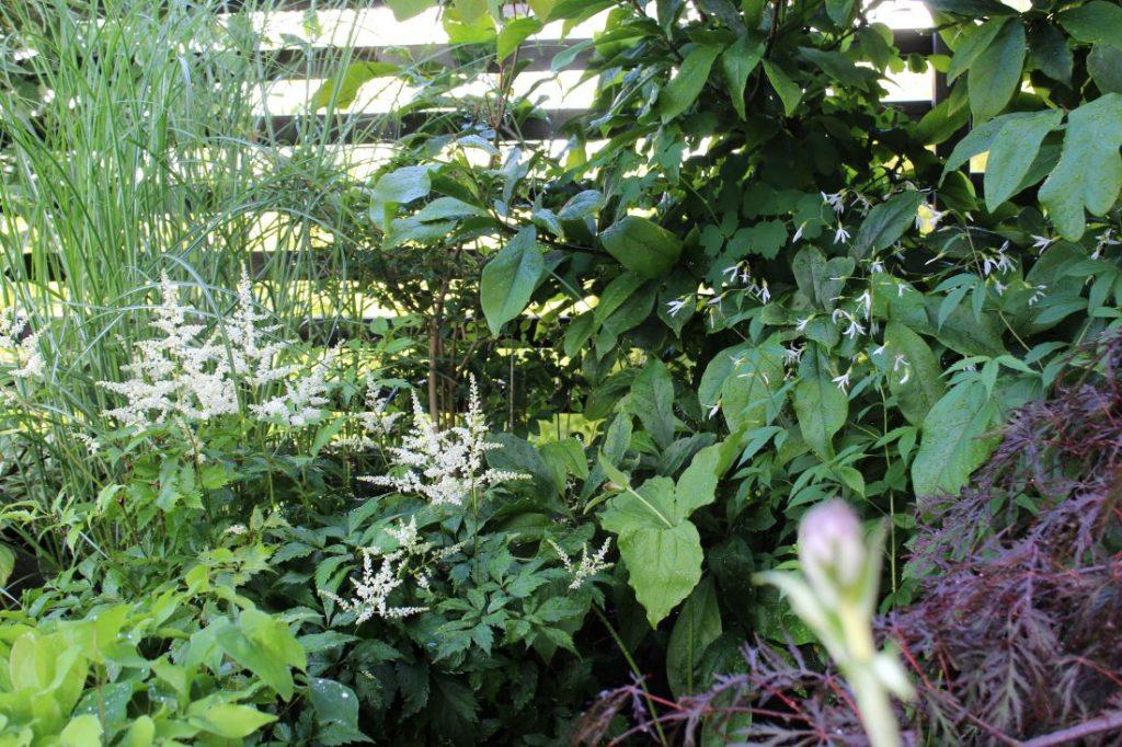 Få det fint i skygge med planter som trives, Et frodig skyggehjørne
