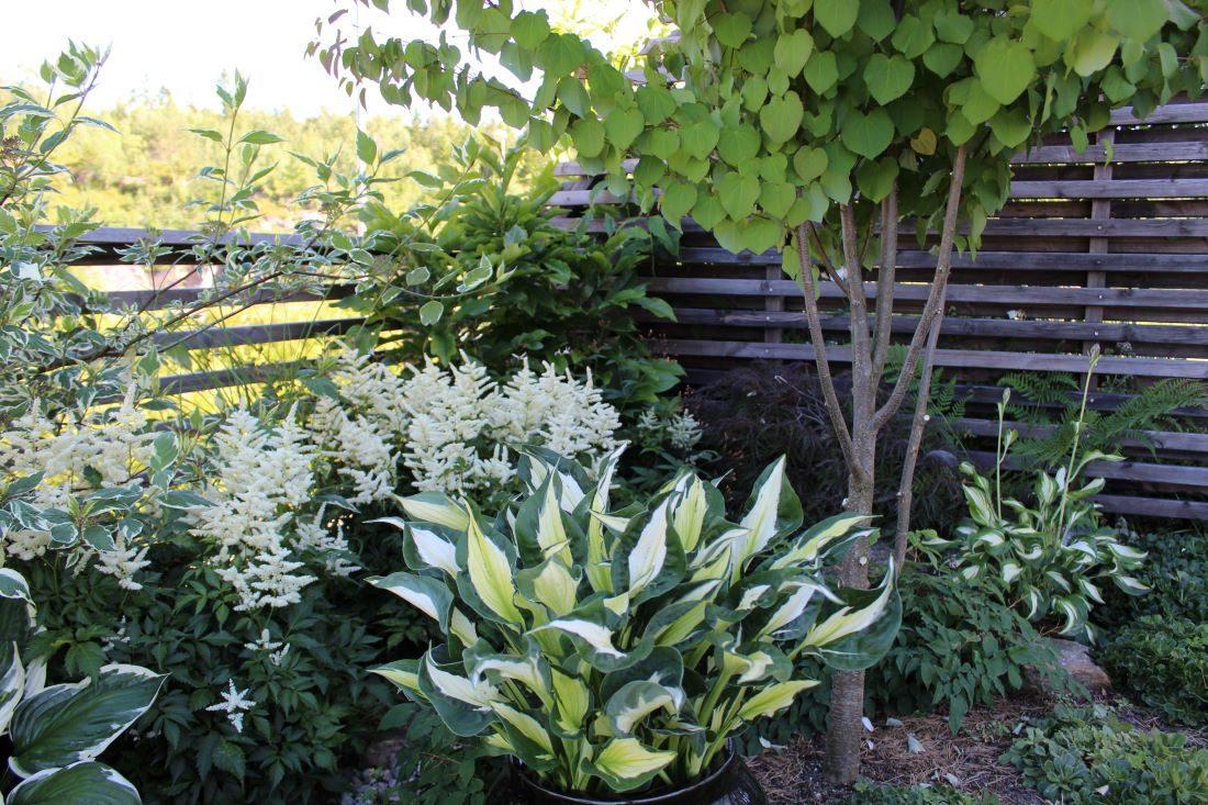 Få det fint i skyggen med planter som trives